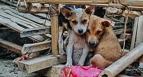 Izgradnja sistema kontrole populacije pasa u Srbiji