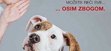 MEETING OF THE BALKAN COUNTRIES ON THE TOPIC OF ABANDONED ANIMALS