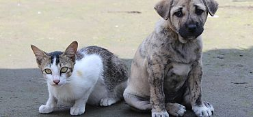 TOGETHER WE PROVIDED 15,000 MEALS FOR ABANDONED CATS AND DOGS