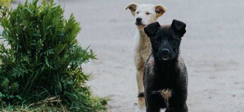 Ubijanje pasa nije odgovor
